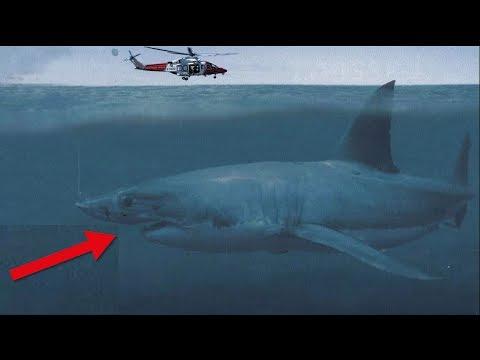 Hat ein echter MEGALODON im Pazifik überlebt ?!