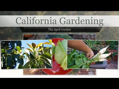 The California Garden in April - Grape Plant Reveal!