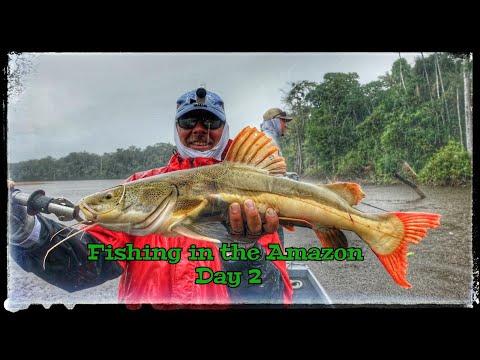 Fishing For Peacock Bass Arowana Red Tail Catfish In The Amazon River Pt. 2
