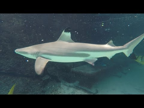 Swimming With Sharks At Discovery Cove Orlando | NEW Shark Swim Experience
