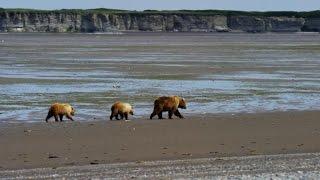 Increase in deadly bear attacks in Alaska