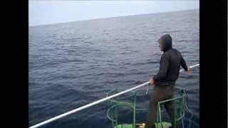 "Video PESCA DE ALBACORA CALDERA ""ALFA Y OMEGA"" pescando un merlin :) download MP3, 3GP, MP4, WEBM, AVI, FLV Desember 2017"