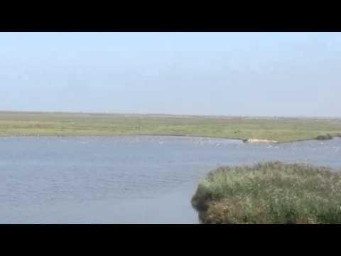 Oostvaarders nature reserve in Netherland