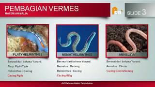 Biologi Kelas X (vermes)