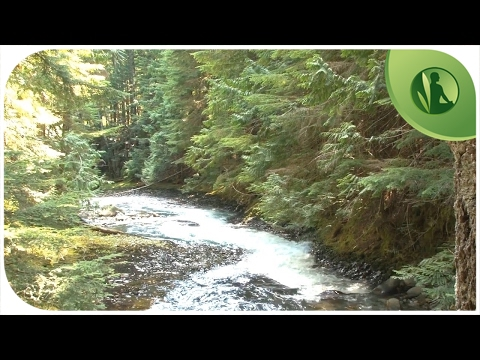 Música Relaxante para Acalmar a Alma: Paz Interior e Relaxamento com Sons da Natureza