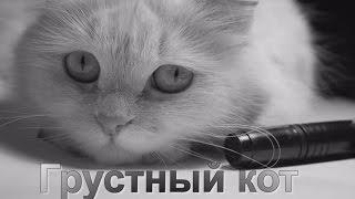 Грустный кот - о чем задумался, пушистик?