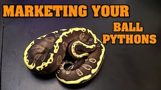 How To Market Your Balls - helping with sales/breeding