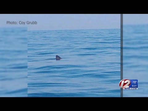 DEM taking steps to monitor sharks off RI coast