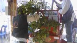4-2E-Nimut_Tree.mpg