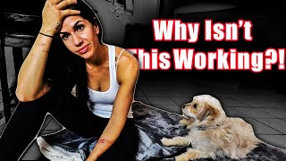 Why Isn't My Dog's Training Working?! (Problem SOLVED NOW!)