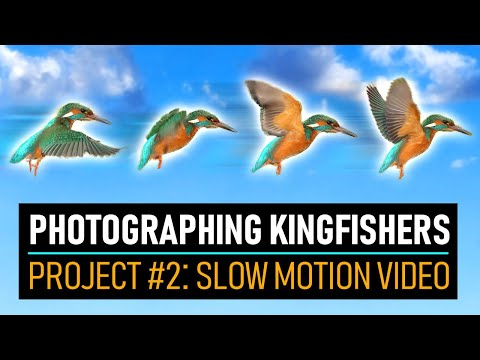 Photographing Kingfishers In SLOW MOTION | Wildlife Photography Vlog
