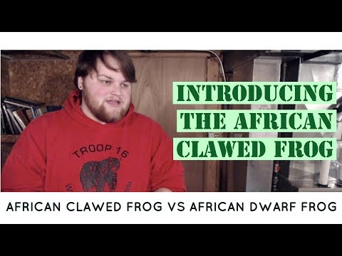 Introducing the African Clawed Frog