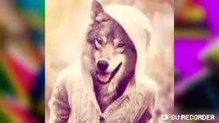 Самые красивые картинки волков.надо любить животных