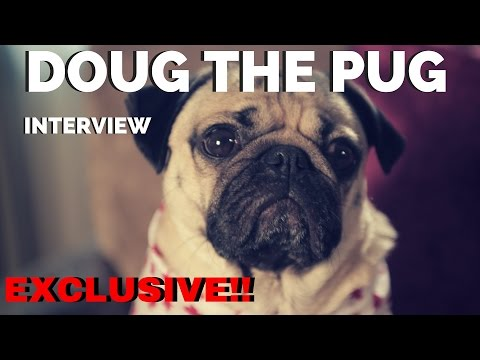 Meet the Amazing King of Pop Culture - Doug the Pug!