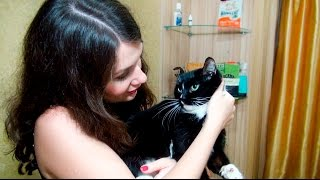 Подберем корм для кошки АСМР Зоомагазин ASMR Role Play(Корм для кошки - АСМР Видео и расслабляющая ролевая игра