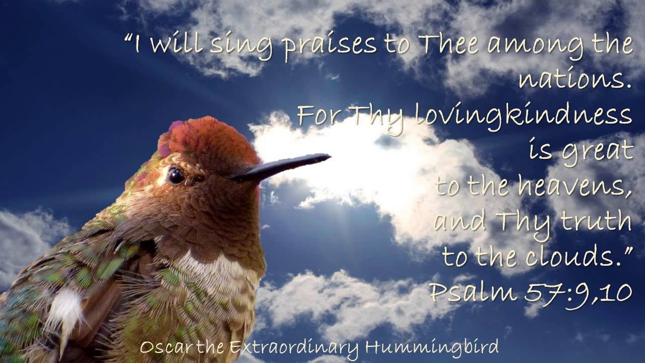Hummingbirds Scripture Youtube