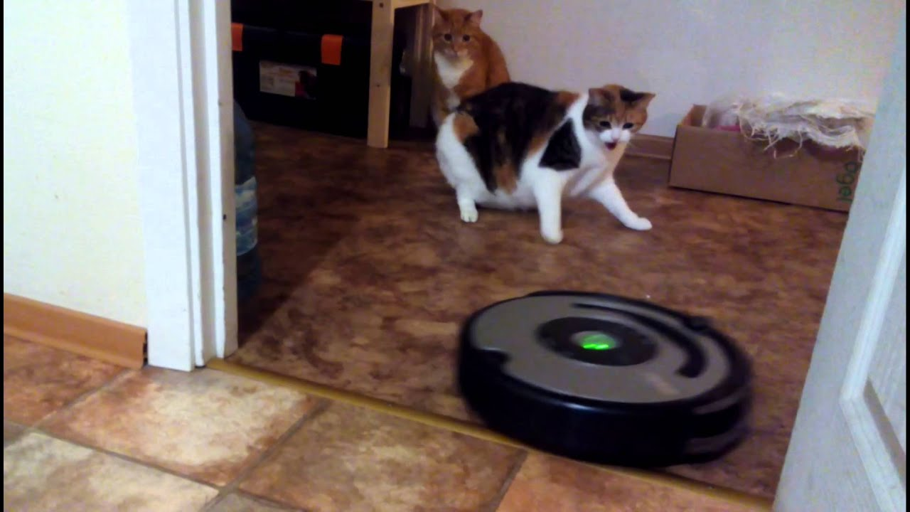 Котики боятся робот-пылесоса