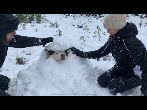WE BURIED OUR SNOW DOG | ALASKAN MALAMUTE SNOWED UNDER