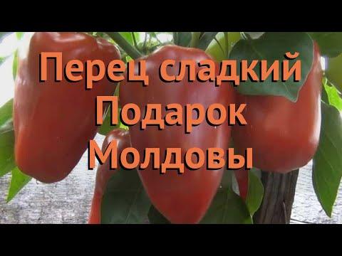 Перец сладкий Подарок Молдовы (podarok moldovy) �� обзор: как сажать, семена перца Подарок Молдовы