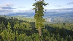 Die 5 Unglaublichsten Bäume der Welt!