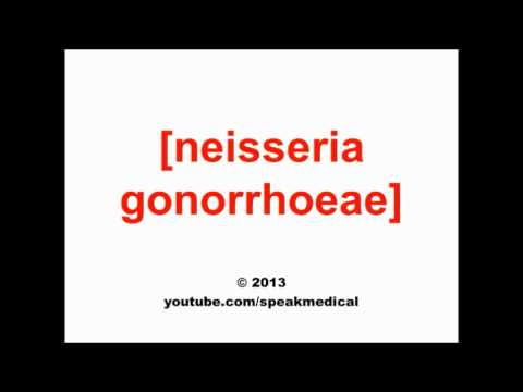 Pronounce Neisseria gonorrhoeae | SpeakMedical - YouTube