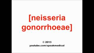 Pronounce Neisseria gonorrhoeae | SpeakMedical