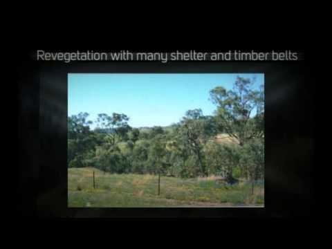 Organic farm for sale Wagga NSW - wagga organic farm