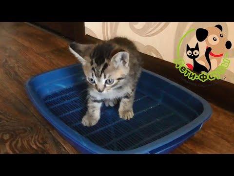 Сколько раз в день кошка (кот) должна мочиться?