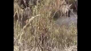 охота на лосей в перми