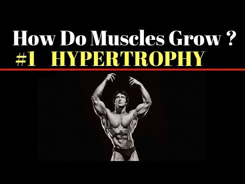 How can Muscles Grow The Simplified Science of Bodybuilding