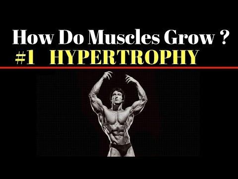 How Do Muscles Grow? #1 HYPERTROPHY