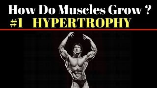 How Do Muscles Grow ? #1 HYPERTROPHY