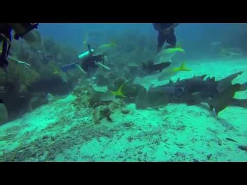 Scuba Diving with Sharks, Moray eels, & other marine life in Belize