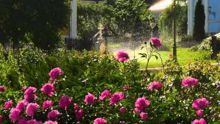 Цветы(, 2014-12-04T22:05:59.000Z)