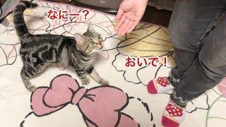 妹の「おいで」の声に反応してどこまでもついてくる可愛い猫w