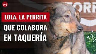 Lola, la perrita que colabora en una taquería de Ciudad Victoria; causa sensación en redes