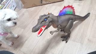 움직이는공룡장난감 처음 본 강아지 반응