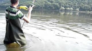 Sazan avı