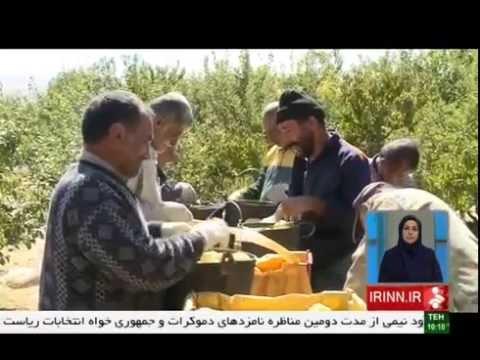 Iran Damavand county, Organic Apple harvest برداشت سيب ارگانيك شهرستان دماوند ايران