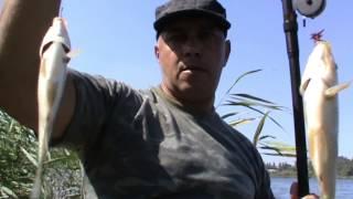 ловля карася с лодки , фильм четвёртый .(Из за жаркого периода, большинство рыбы находится в тени камыша. Поэтому я решил ловить на постоянном месте., 2015-07-28T06:48:36.000Z)