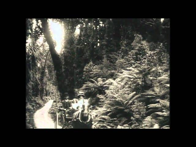 Moments in Time - Pelorus Jack