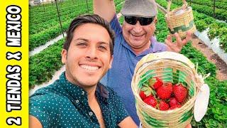Me llevé de VIAJE A MI PAPÁ! 😁 #2TiendasXMexico | Alex Tienda ✈️