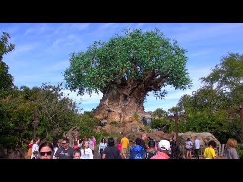 Disney's Animal Kingdom 2018 Tour and Overview | Walt Disney World