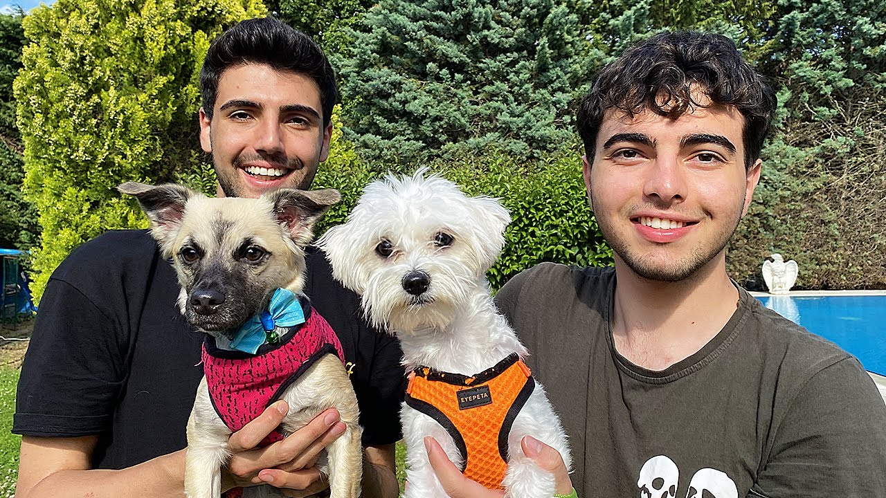 Download YENİ KÖPEKLERİMİZ '' LİLİ VE ÜZÜM'' (Dünyanın En Sevimli Köpekleri) 🐶