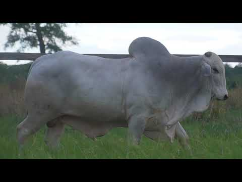 LOTE 106   GPO A 3131