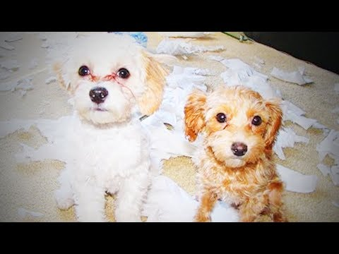 Funny Guilty Dogs 🐶 Funny Dogs Faces After Being Caught (Part 2) [Funny Pets]