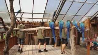 Papegøje Show i Jesperhus Feriepark