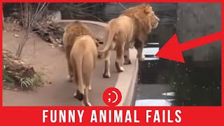 Animal Funny Fails 2020 - Funny Videos