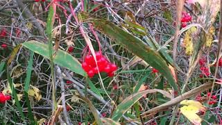 ягоды в лесу Тюмень