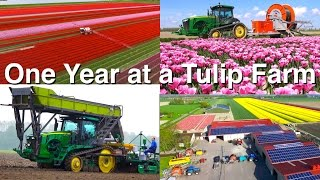 One Year at a Tulip Farm | Planting to Harvest | Dogterom Flowerbulbs | Colors of the Netherlands